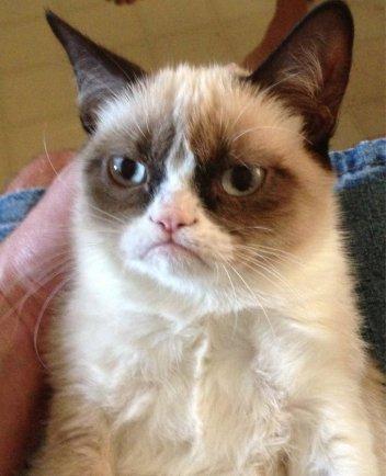 """picture of a grumpy cat"""