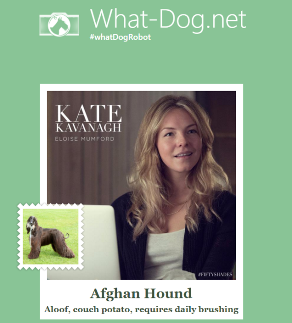 what dog kate kavanaugh